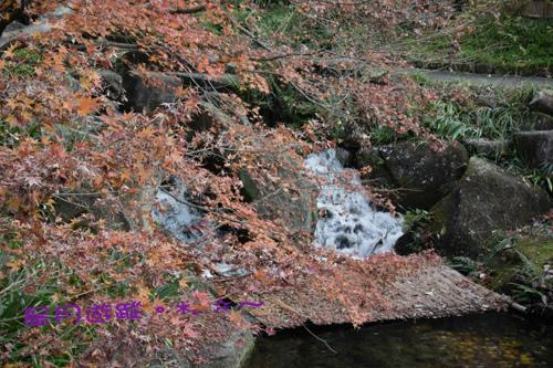 「大曽根の瀧」徳川園2014秋中部