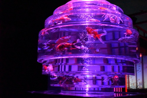 c1金魚展二条城     (7)
