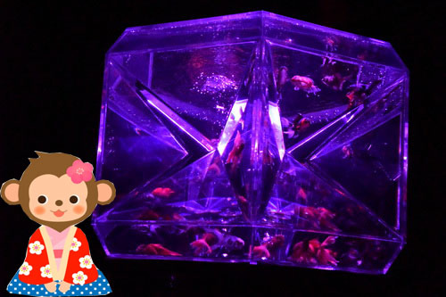c1金魚展二条城     (8)
