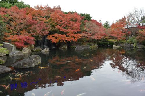 想···好古園姫路市
