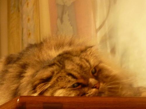 貓~原來 不是朋友