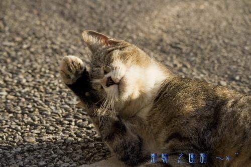 『貓咪物語』之~妹妹、老白、小黑