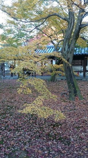 b姫路城 (14)