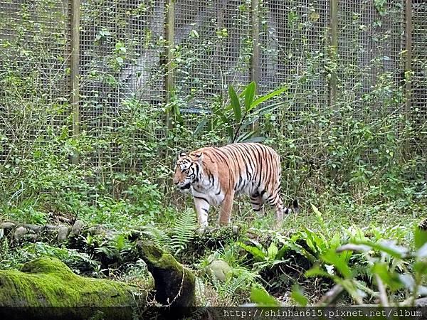 動物園穿搭_170301_0008.jpg