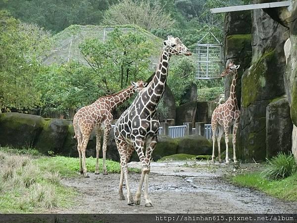 動物園穿搭_170301_0016.jpg