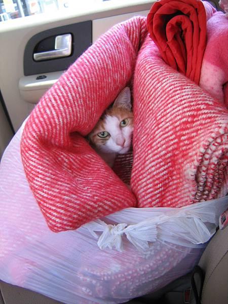 Mimi in blankets 07-04-05ii