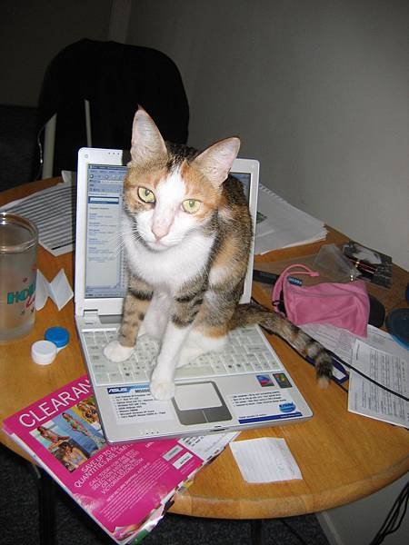 Mimi types on laptop (July 2005)
