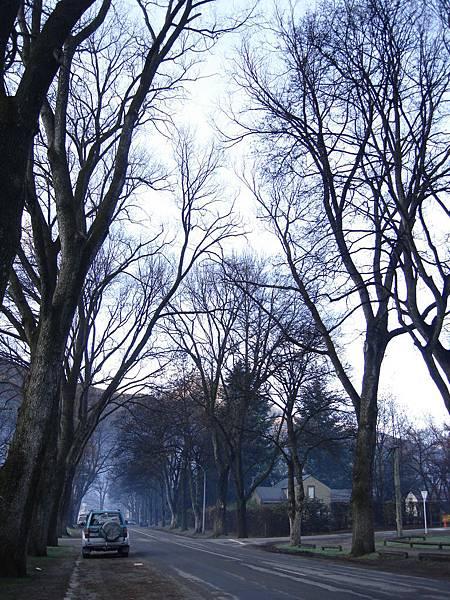初冬的Arrowtown已經一片葉子也沒了