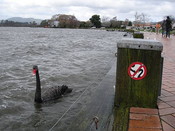 Lake Rotorua邊,請勿餵我