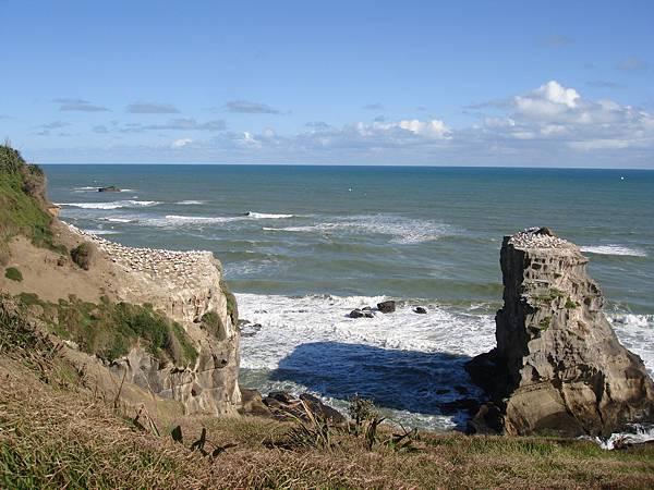 前方的岩石上都是塘鵝