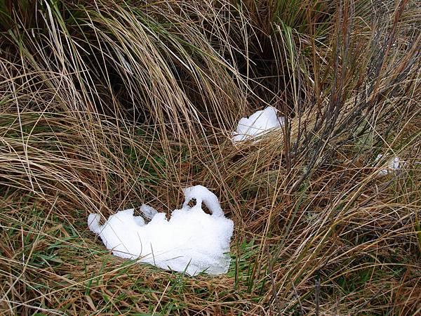 草叢中的殘雪