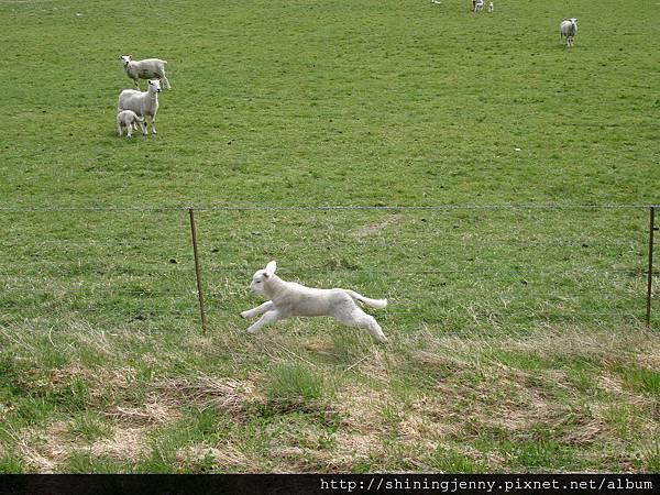 飛躍的小羊咩