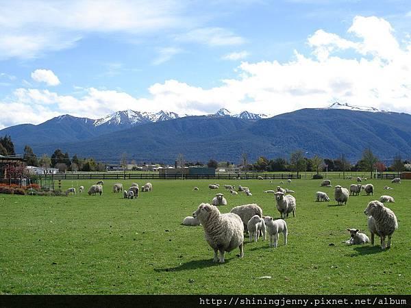 BBH旁的羊群