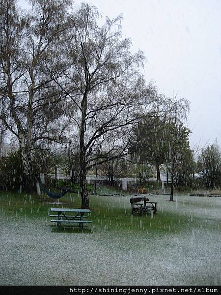 下起了春雪!