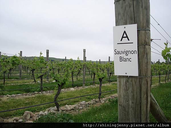 這種葡萄酒在紐西蘭很有名