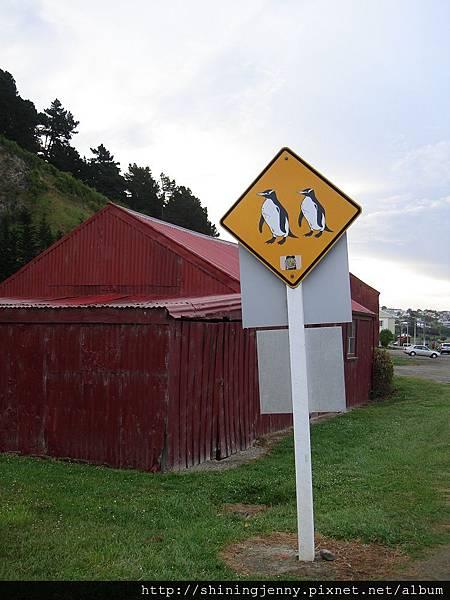 小心企鵝過馬路
