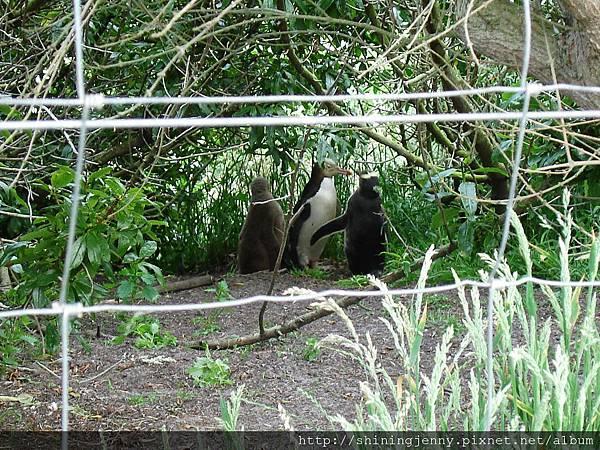 這是有企鵝大寶寶的家庭