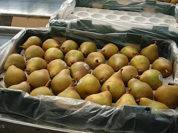 也會包裝梨子