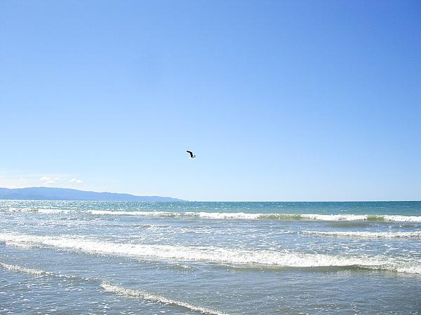 飛翔的海鷗很適合這美景