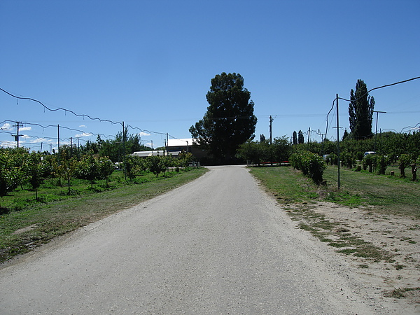 Summerfruit orchard