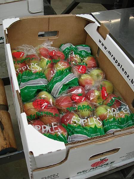 1公斤的七顆蘋果排排好