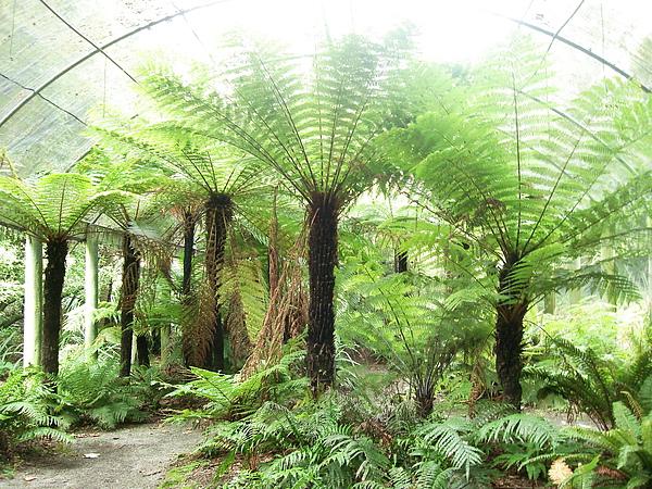 Public Garden裡的蕨類室