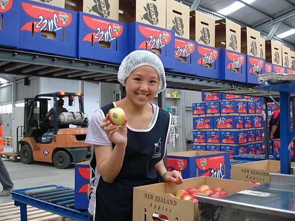 我是蘋果包裝女工