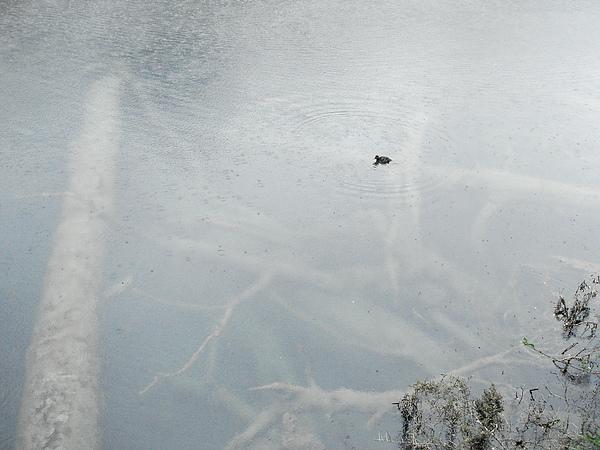 Mirror Lakes,清澈到可怕的湖水