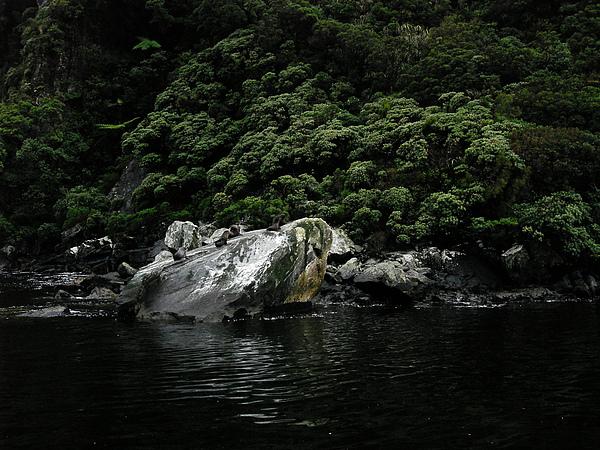 前方石頭上是海豹