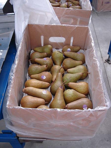 這是很可怕很難包裝的梨子