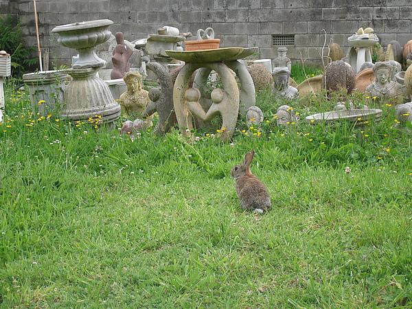 某天撞見的野兔