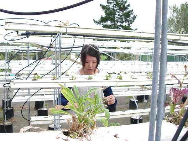 工作ing,種小植物