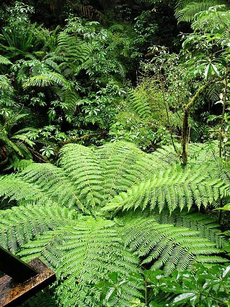 好漂亮的fern tree