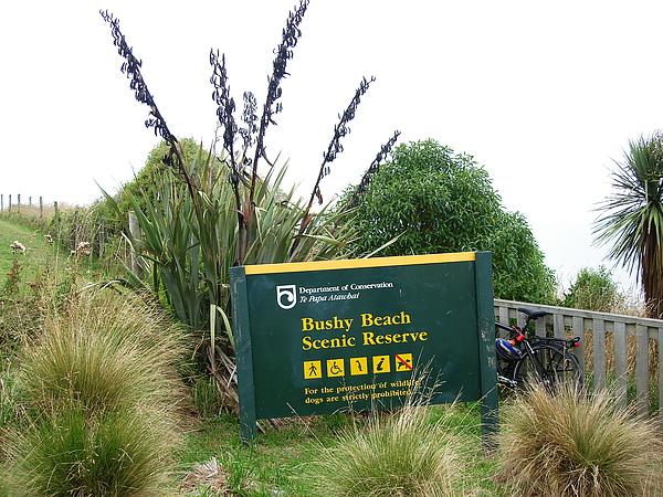 看黃眼企鵝上岸的Bushy Bay