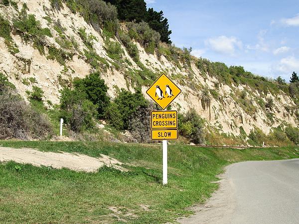 小心企鵝過馬路!