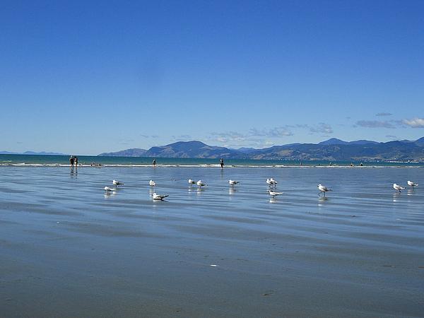 還有成群窩在沙灘上的海鷗