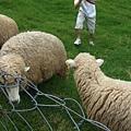 羊咩咩.JPG