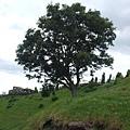 覺得這顆樹很有feel.JPG