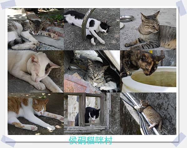 貓咪圖.jpg