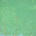湖面上停駐的紅蜻蜓.JPG