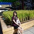 水稻.JPG