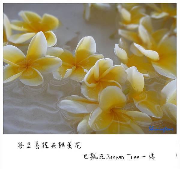 Banyan Tree_雞蛋花.jpg