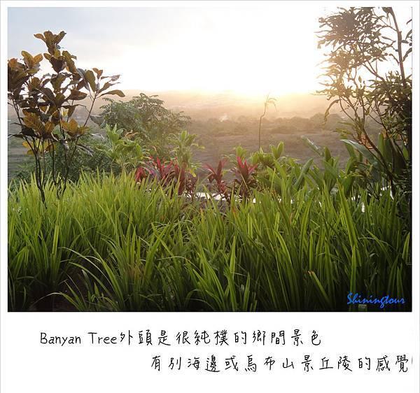 Banyan Tree_鄉野風景.jpg