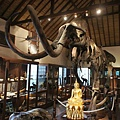 Safari park lodge