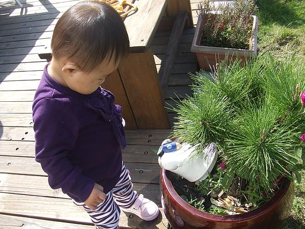 妮可花園32