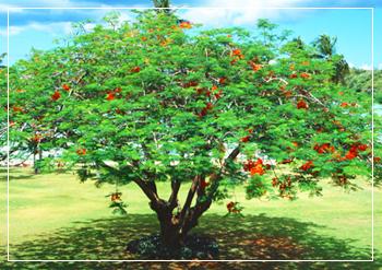 樹木-1.jpg