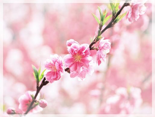 春天養生-24節氣清明