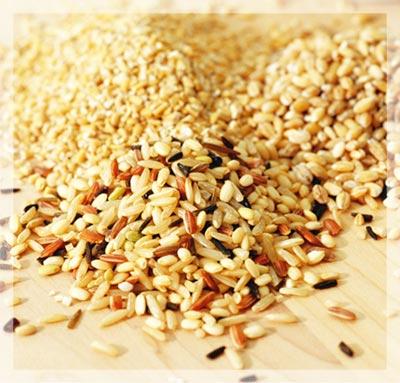 五穀雜糧 黃米 玉米 稻米 糙米 蕎麥 燕麥 小麥 大麥 小米