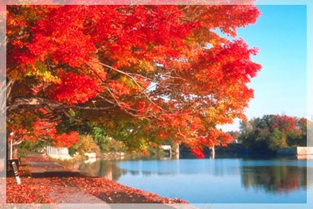 秋天養生 24節氣養生 立秋 處暑 白露 秋分 寒露 霜降