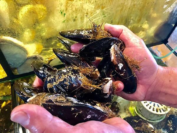 新鮮活體馬祖淡菜殼上會有類似海草的鬚足,淡菜用來固定身軀與呼吸的重要器官,鬚足越多表示淡菜越壯碩.jpeg